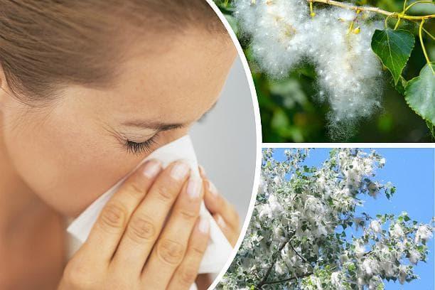 Насморк и чихание при аллергии